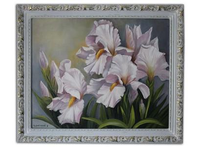 Красивые цветы Ирисы